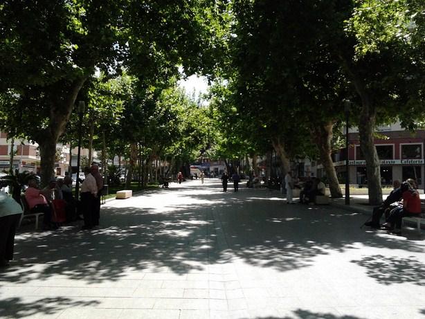 Velez and walking trees1 (Copy)