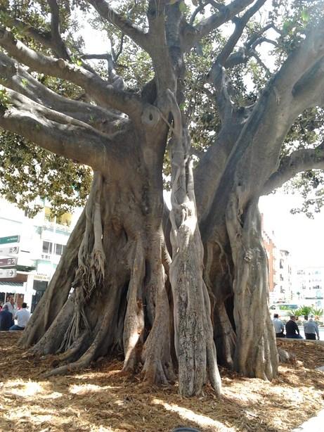 Velez and walking trees2 (Copy)