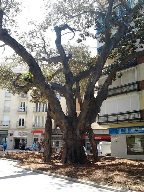 trees3 (Copy)