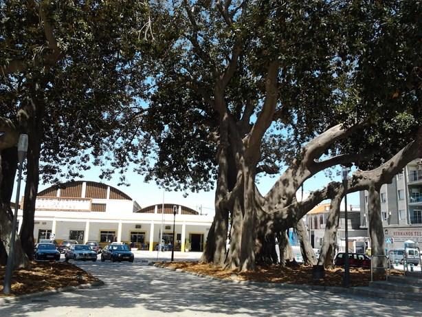 trees5 (Copy)