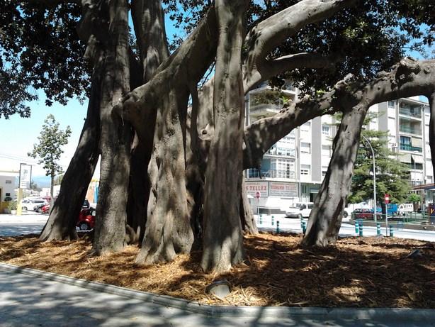 trees6 (Copy)